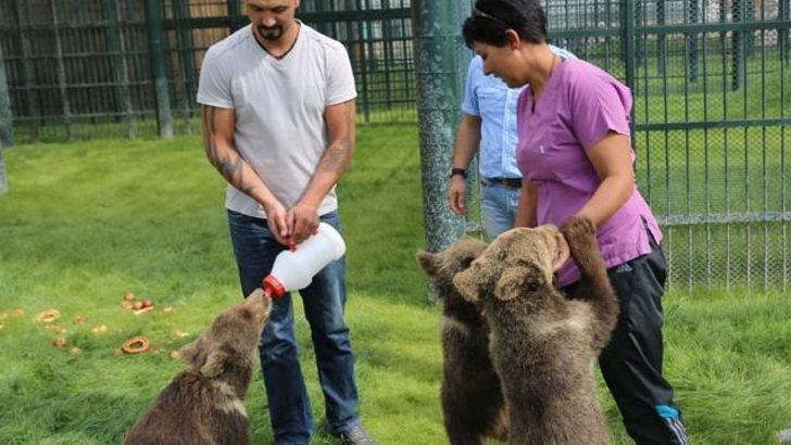 Harikalar Diyarı'nın harika ayıları