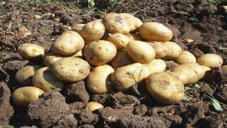 Rusya'da patates gazı bir aileyi yok etti