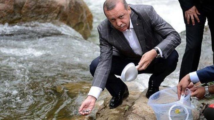 Erdoğan yavru balıkları suya bıraktı