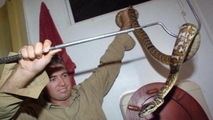 Sözleşmeli yılan yakalayıcısı aranıyor