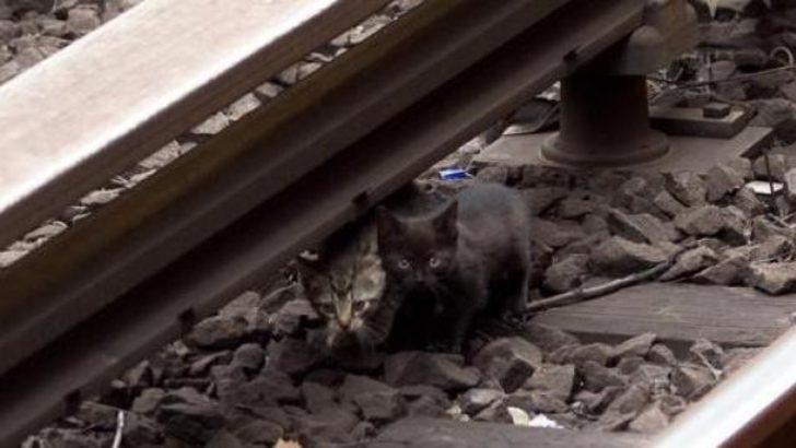 Yavru kediler New York metrosunu feç etti