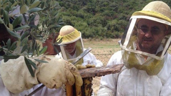 'Türkiye'de arı ölümleri kaygı verici boyutlara geldi'