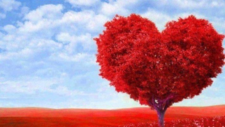 Sevgililer Gününe özel hediyeler, aşk mesajları, yemek tarifleri