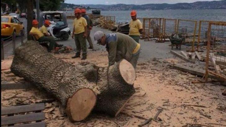 "İBB'den ""ağaç kesimi"" açıklaması"