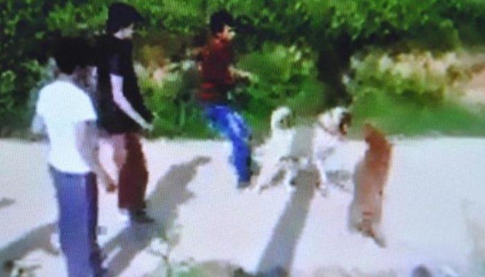 Köpek dövüştürenlere 15 bin lira ceza kesildi