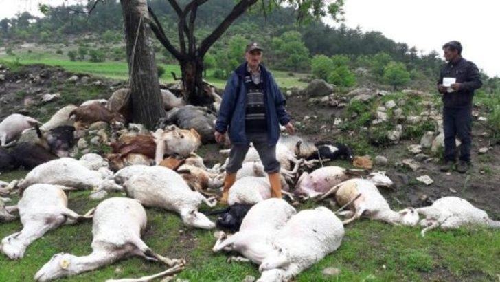 Yıldırım düştü, 52 koyun telef oldu