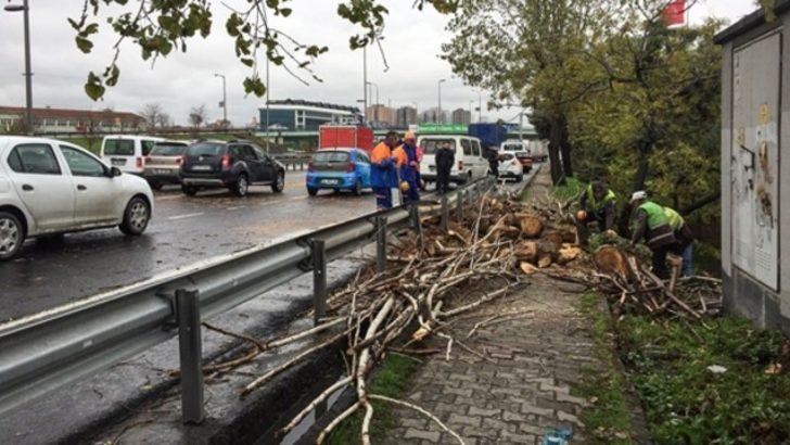 İstanbul'da fırtına: Çatı uçtu, ağaç devrildi