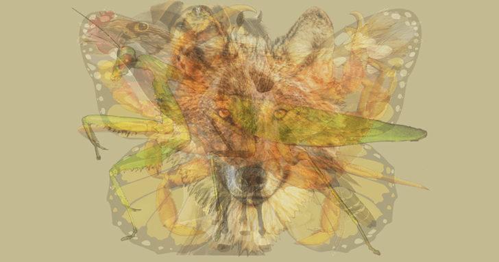 Resimde ilk gördüğünüz hayvan baskın karakterinizi ortaya çıkarıyor