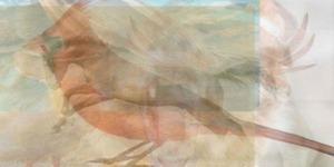 Bu resimde gördüğünüz ilk hayvan bakın ne anlama geliyor?