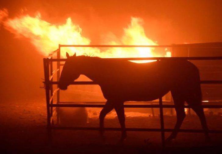 30'dan fazla at öldü