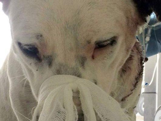 Yaralı köpeğin röntgen filmini görenler şok oldu