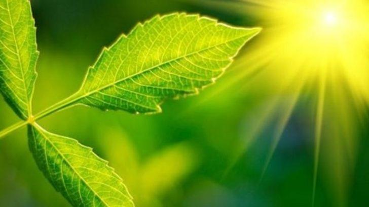 Yapay fotosentez ortamı oluşturmak mümkün olabilir mi?