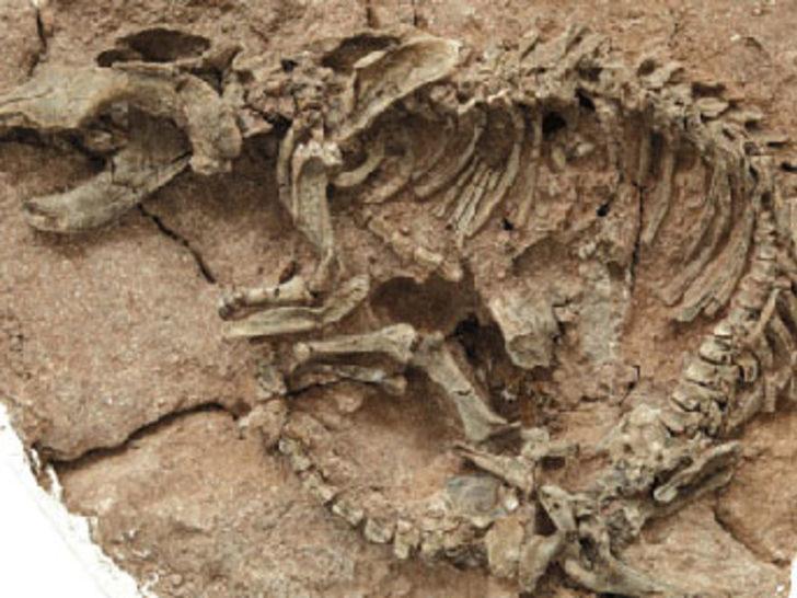 Dinozor yuvası 420 bin dolara satıldı