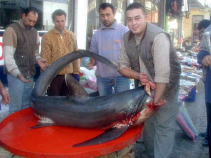 Çanakkale'de dev köpek balığı yakalandı