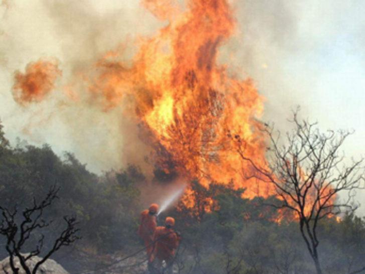 5 yılda 28 bin hektar ormanlık alan yandı