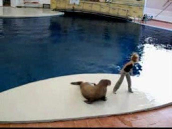Deniz arslanından dansçıları kıskandıracak figürler