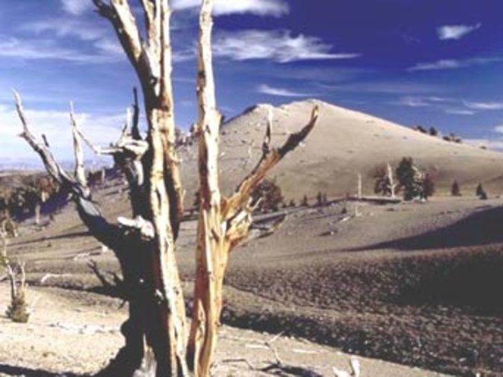 Türkiye'deki kuraklık kritik noktaya ulaştı