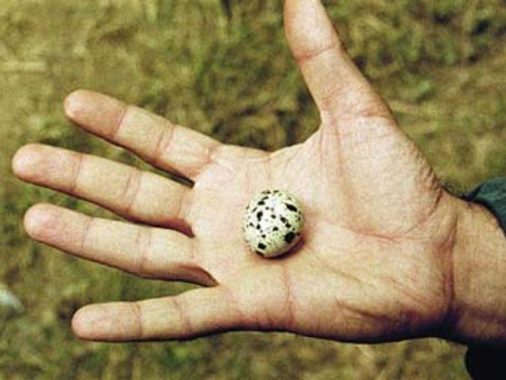'Yumurta'ya ödül tepkisi