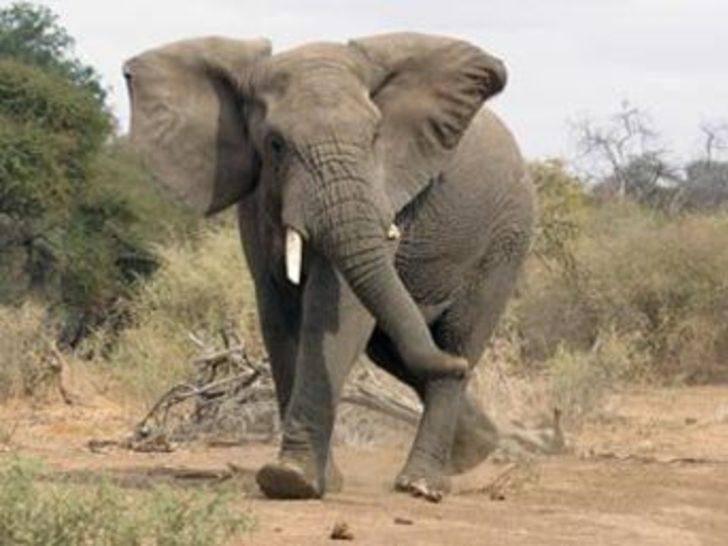 Köye giren fil 3 kişiyi öldürdü