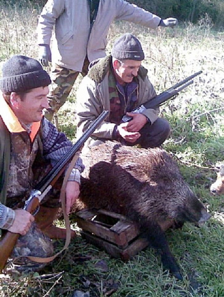 Gebze'nin köylerini domuzlar bastı