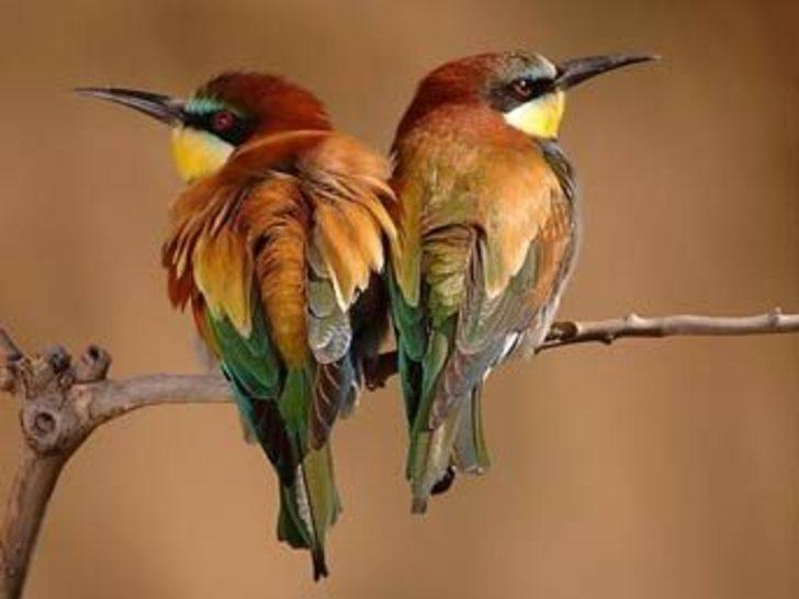 Kuşlar neden öter