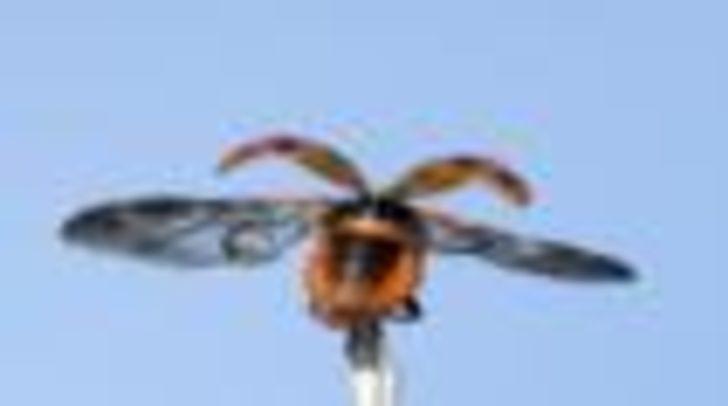 'Uğur böceğinin kanat yapısı 1000 yıllık şemsiyeyi değiştirebilir'