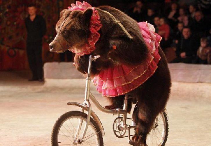 İskoçya sirklerde yabani hayvan yer almasını yasakladı