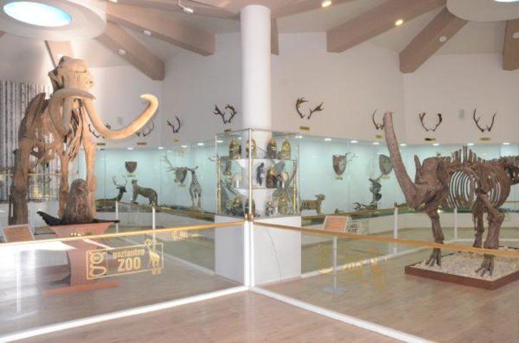 Türkiye'nin ilk Zooloji Müzesi, eğitim merkezi halini aldı