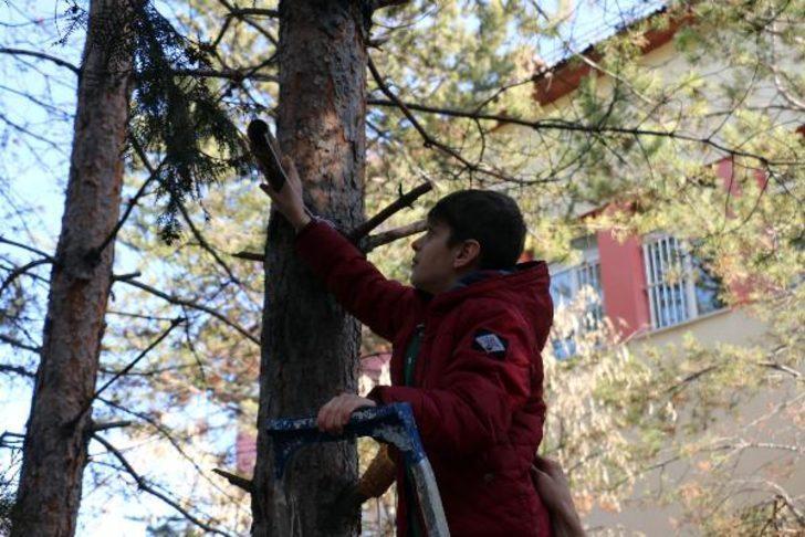 Öğrenciler, kuşlar için yuva yapıp, ağaçlara yem bıraktı