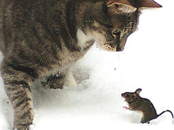 Gerçek Tom ve Jerry