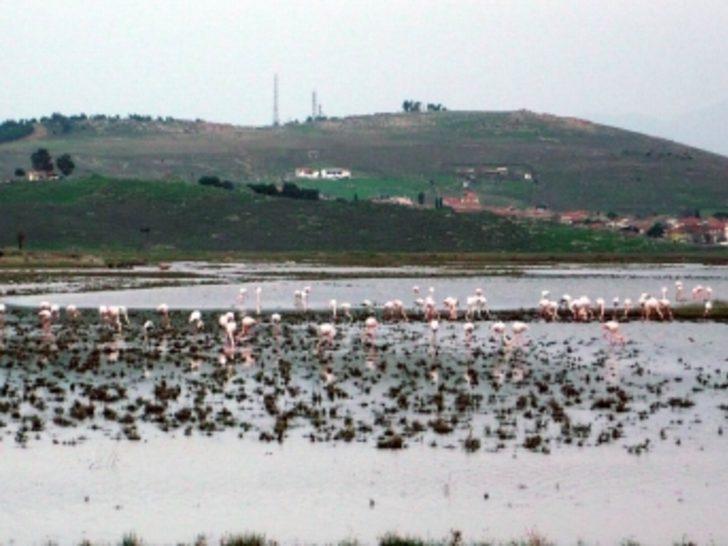 Uçak pistine flamingolar indi
