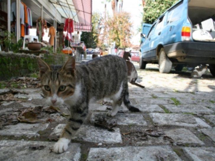 Sokak kedileri evini mesken tuttu