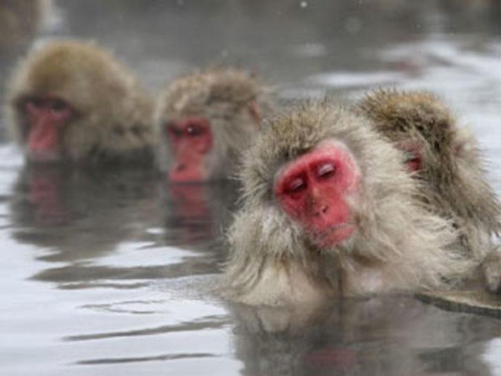 Maymunların kaplıca keyfi