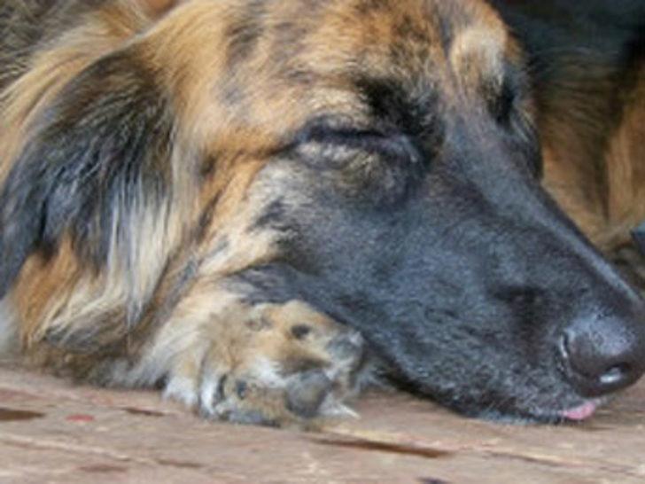 Köpekle sevişen kadın öldü!