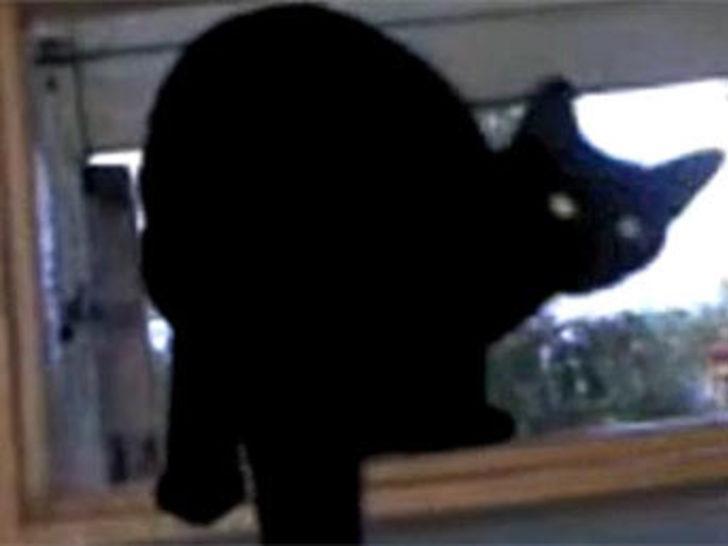 Köpek takliti yapan kedi
