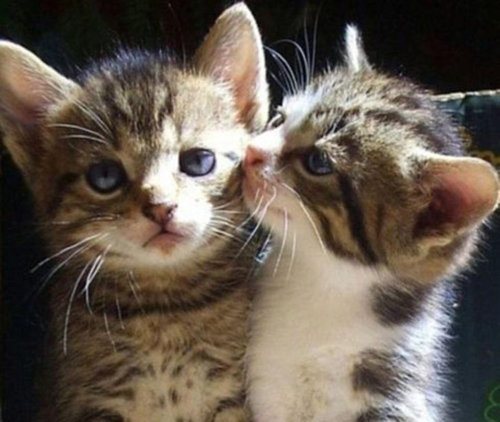 Dünya Kediler Günü Kutlu Olsun