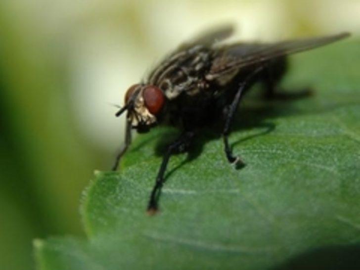 DERGİ  Gelecekte gıda sektörü böceklere mi dayanacak?