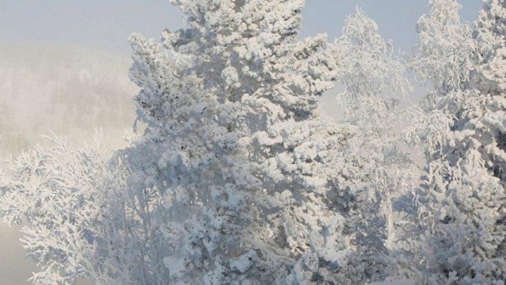 -30 derece soğukta çam ağacı yapraklarını yiyerek hayatta kaldı