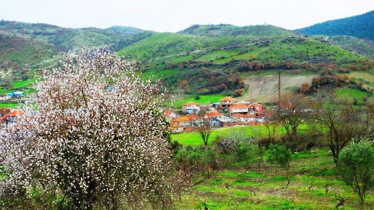 Balıkesir'de badem ağaçları erken çiçek açtı