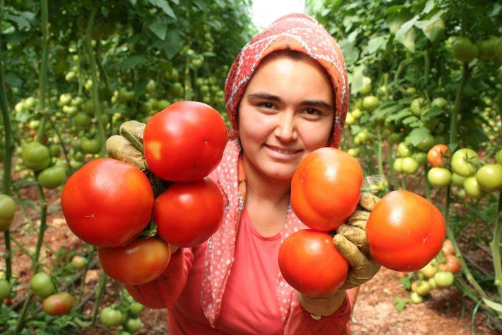 İhracatçılardan, Rusya'nın domates ithalatı kısıtlamasına tepki