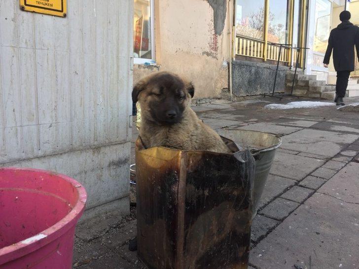 Soba közünde ısınan yavru köpeğe şefkat eli
