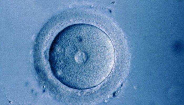 Laboratuvarda büyütülen ilk insan yumurtası gelecekte doğurganlığa yardımcı olabilir
