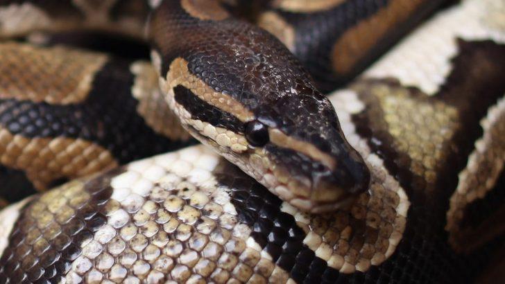 Nijeryalı gişe görevlisi: 100 bin doları yılan yedi