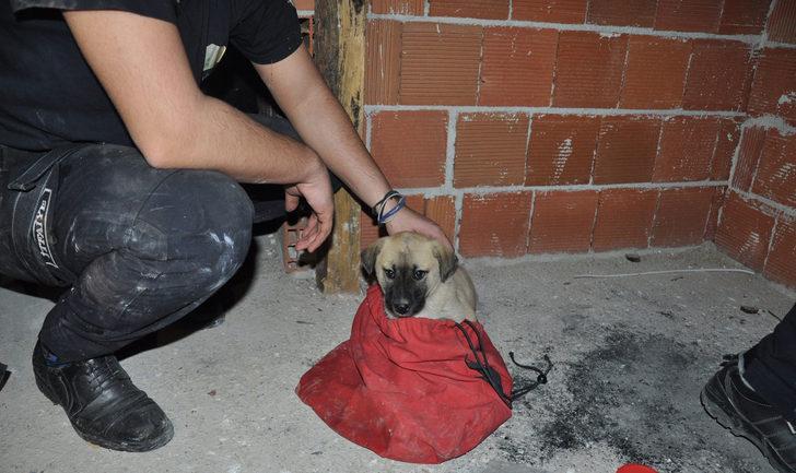 Havalandırma boşluğuna düşen yavru köpek, itfaiye tarafından kurtarıldı