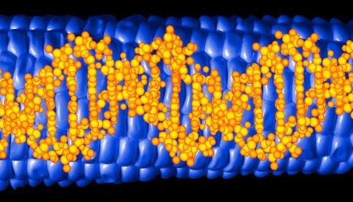 Kanserle mücadelede yeni silah: Mikroskobik DNA robotları farelerde tümörleri küçülttü