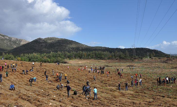 Datça'da yanan ormanlık alan, şehitler anısına ağaçlandırıldı