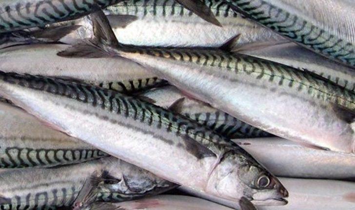 Bu balıkların yararı değil zararı var! Aklınızda olsun, TÜKETMEYİN