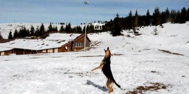 Drone gören köpek güldürdü