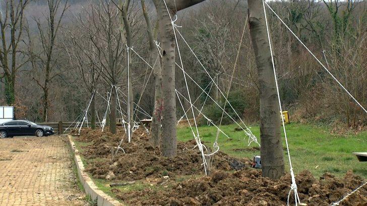 Maçka Parkı'ndan ağaç taşıma işlemi sona erdi