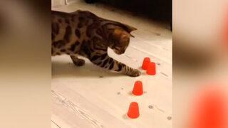 Doğru seçeneği bulan kedi